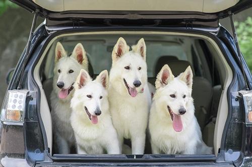 Transport d'animaux domestiques